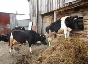 фото фермера