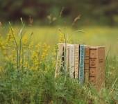 читальня лето