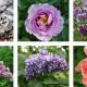 цветы01