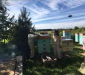 сумароково мед