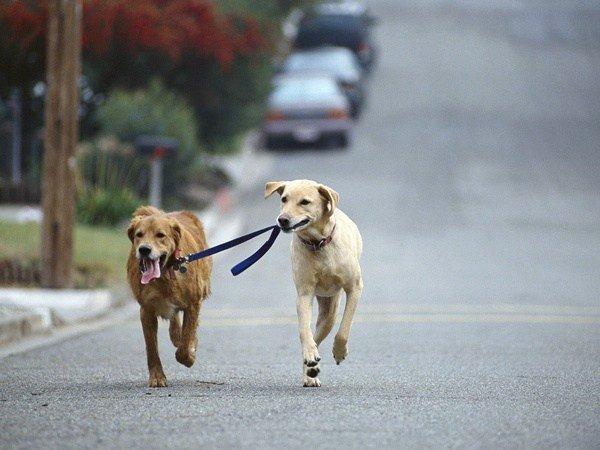 собаки выгул