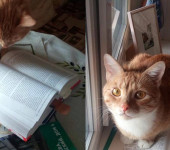 Истра кот Персик
