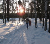 Клин лес лыжи