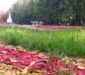 парк толстого цветники